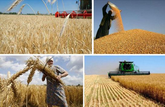 1-10月俄罗斯粮食出口总量达193亿美元 非粮食出口增长13%